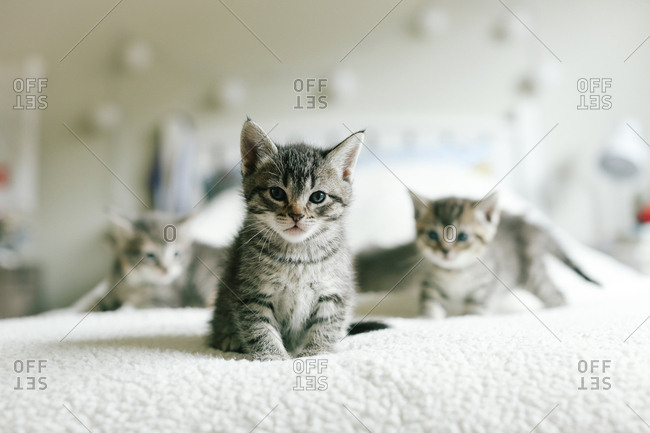 Baby cat on bed