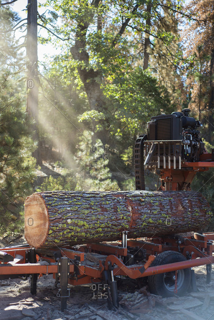 A live edge log on a mill in a forest