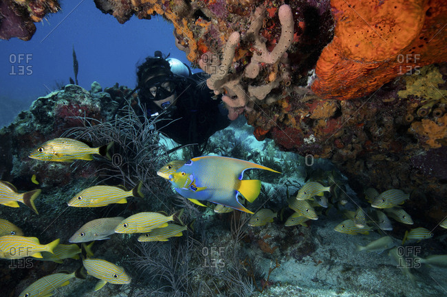 Reef scene with scuba diver and schooling fish