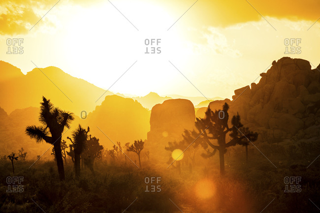 Joshua trees and rock formations in desert at sunset
