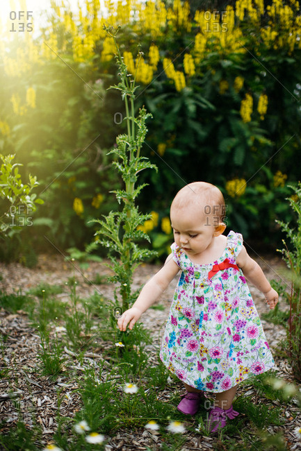 Toddler in dress looking at flowers