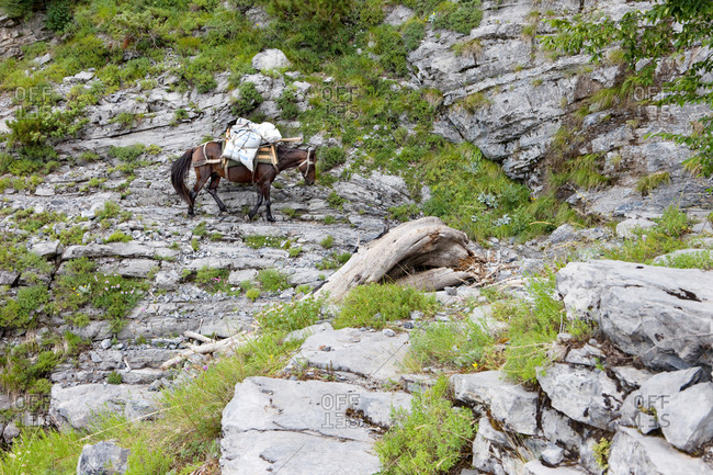 Theth, Albanian Alps, Albania - July 19, 2016: Pack horse up high in the steep mountains