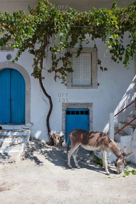 Donkey in front of typical greek house