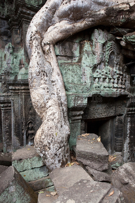 Detail of overgrown Ta Prohm temple