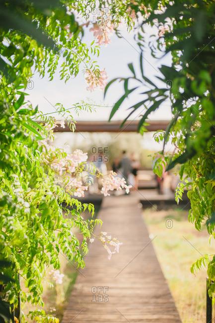 Boardwalk through flowering hedge