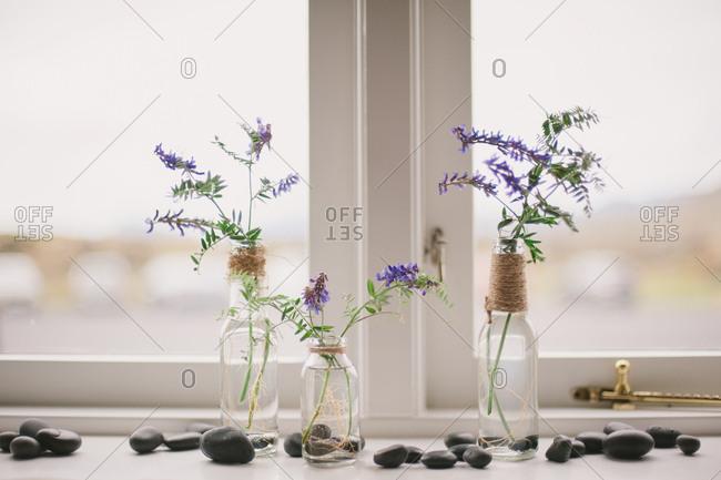 Purple wildflowers arranged in bottles on windowsill with pebbles