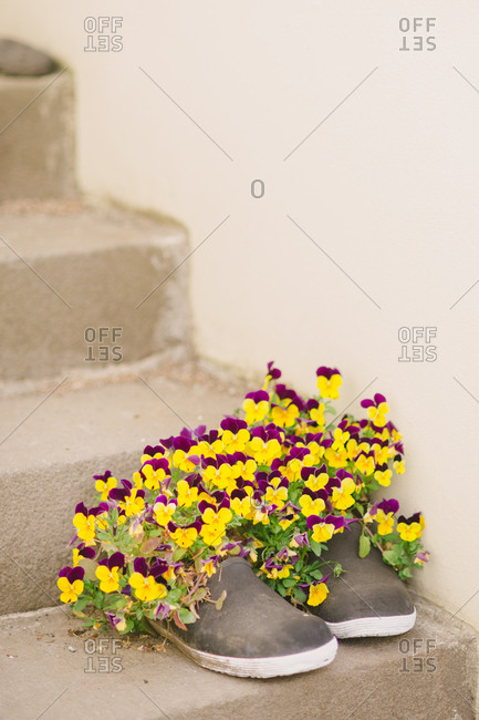 Pansies planted in pair of shoes on staircase