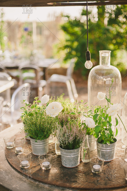 Variety of herbs in decorative metal pails on a table