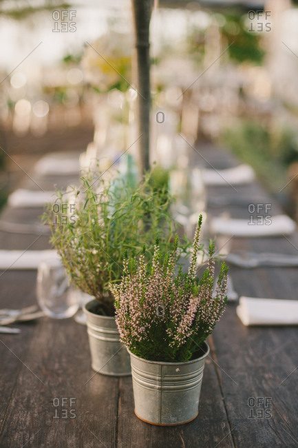 Herbs in decorative pails on a rustic outdoor table