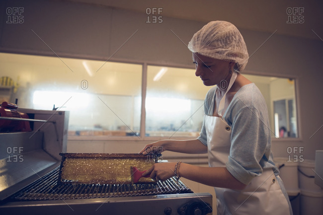 Female worker extracting honey from honeycomb in apiary