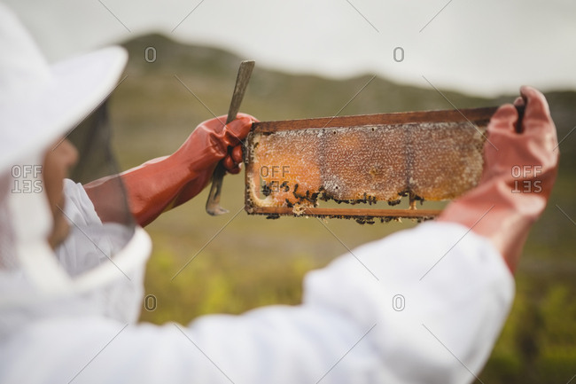 Cropped image of male beekeeper holding hive frame in apiary