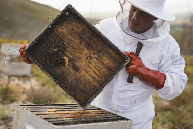 Male beekeeper holding hive frame at farm