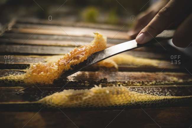 Close-up of beekeeper scraping wax from honeycomb