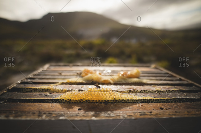 Close-up of beeswax on honeycomb at apiary