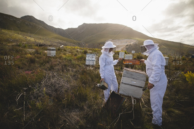 Male and female beekeepers examining beehive at apiary
