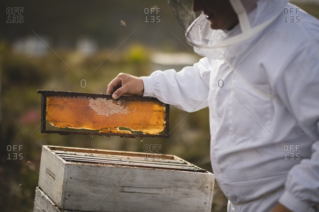Midsection of male beekeeper examining hive frame at apiary