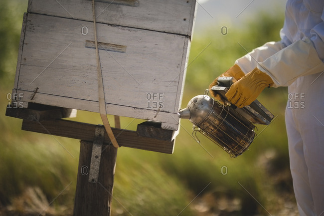 Midsection of female beekeeper smoking bees in honeycomb