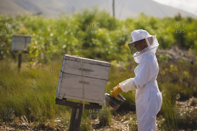 Side view of female beekeeper smoking bees in honeycomb on field