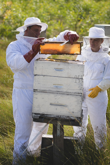 Male and female apiarists examining hive frame at apiary