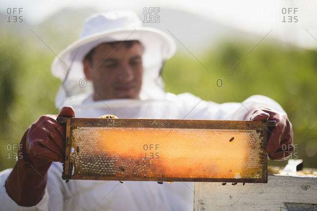 Male apiarist examining hive frame at apiary