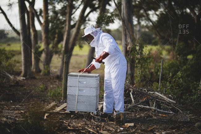 Full length of male beekeeper working on honeycomb at apiary