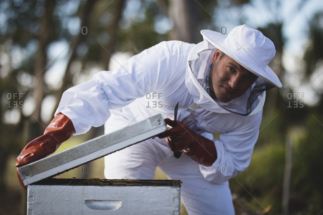 Portrait of male beekeeper opening honeycomb at apiary