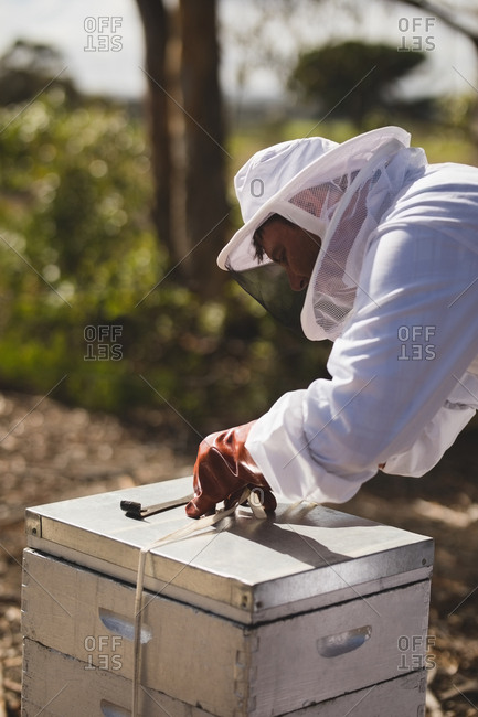 Male beekeeper working on honeycomb at apiary
