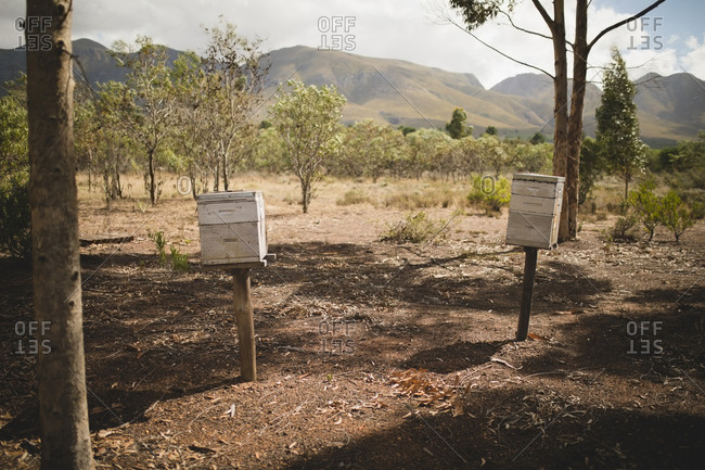 Beehives on field at apiary with mountains in background