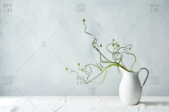 Plants with curved stems and flower buds arranged in a pitcher