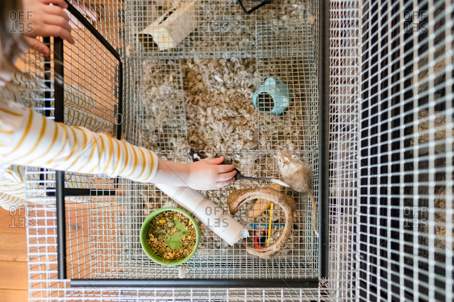 Girl reaching into cage to pet gerbils