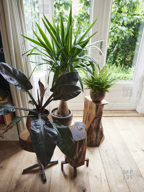 Plants on tables made from logs