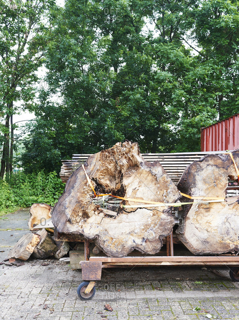 Large logs for woodworking