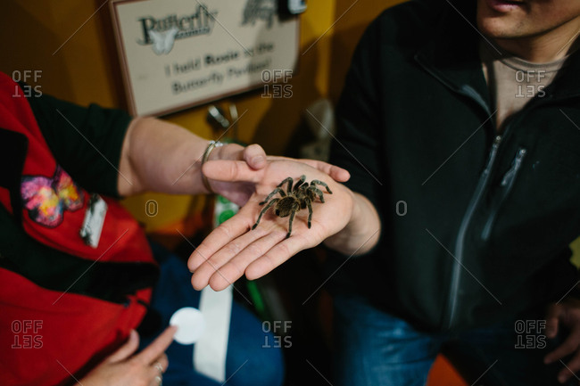 Man holding big spider in hand