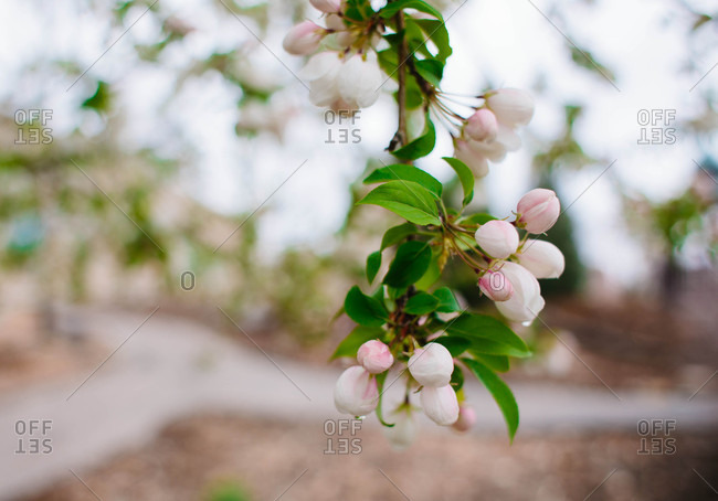 Round flowers blooming on branch