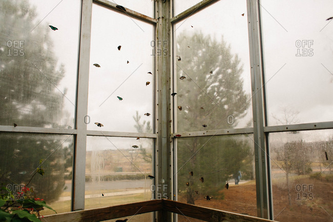 Winged insects covering a window