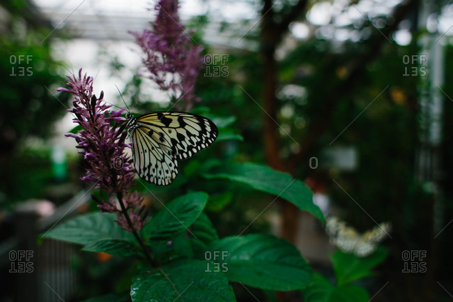 Butterfly perched on flowering plant