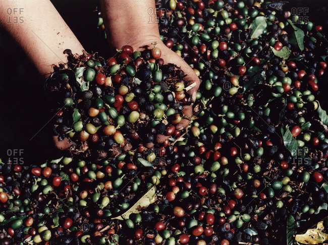 Coffee beans, Brazil