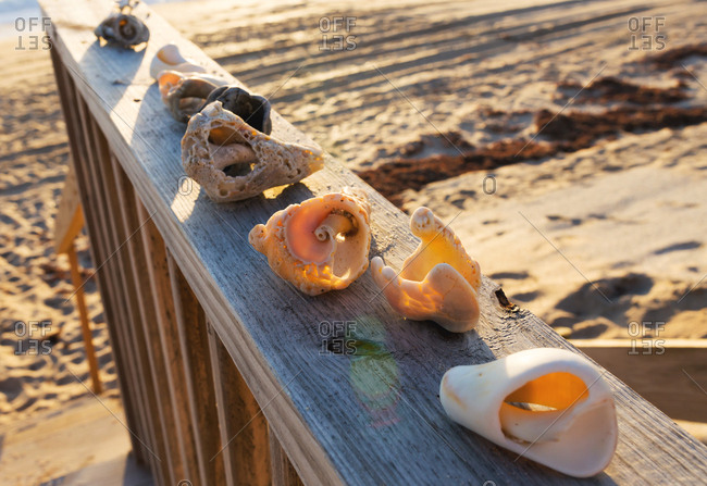Display of sea shells on a deck railing, drenched in sunlight