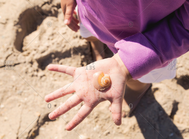 Close-up of a sea shell in a young child's hand