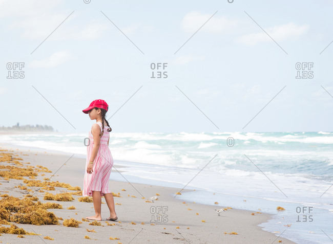 Young girl exploring sea weed on the beach at Blowing Rocks State Park, Hobe Sound, Florida