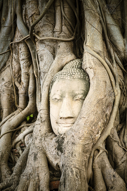Tree roots surrounding face of Buddha statue