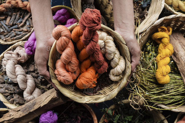 Hands holding basket of naturally dyed cotton