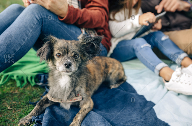 Small dog looking at camera next to family sitting on blanket outdoors
