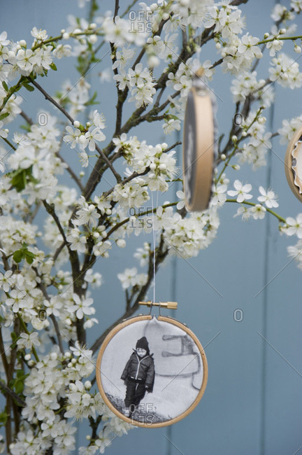 Embroidery frames with photographs printed on canvas hanging at blossoming sloe twigs
