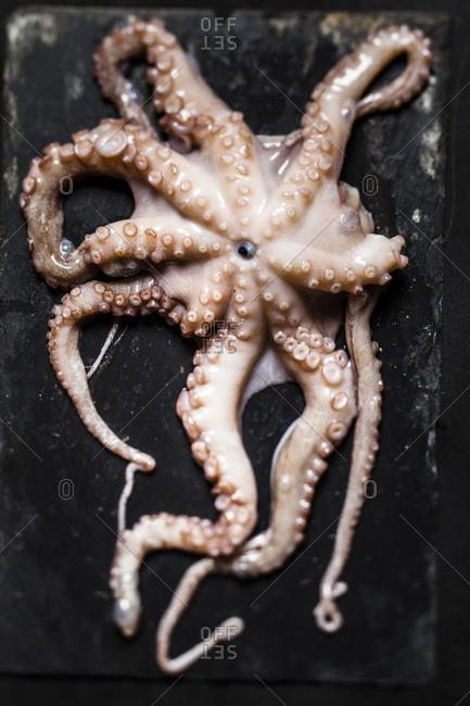 Raw octopus on slate