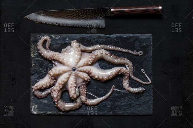 Raw octopus on slate and kitchen knife