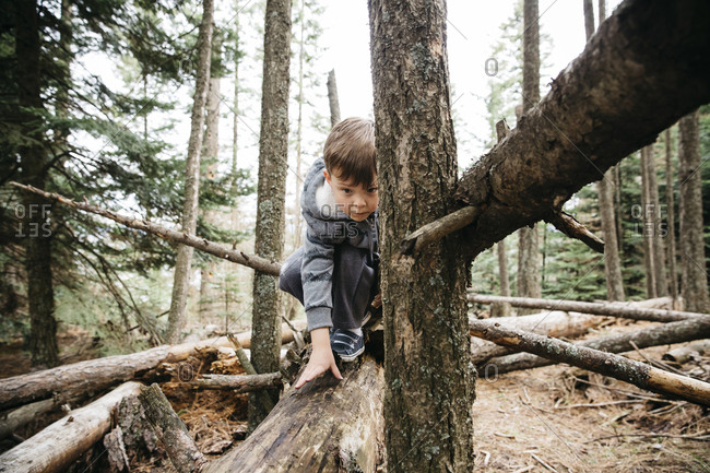 Little boy climbing on fallen trees in the forest
