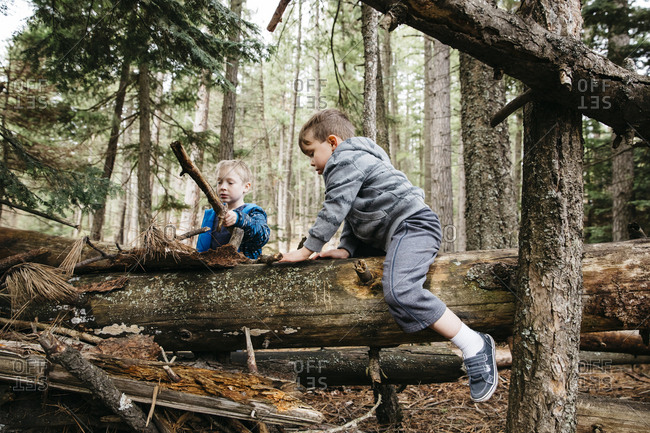 Two brothers playing on fallen trees in the forest