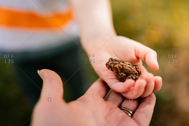 Child holding toad with mother supporting hand