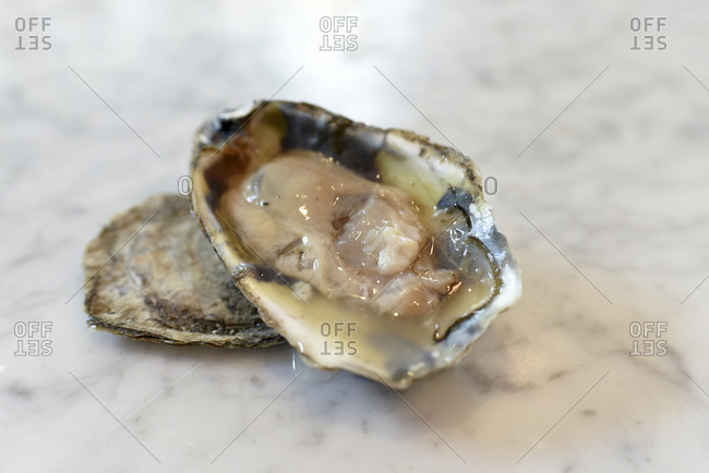 High angle view of oysters on table